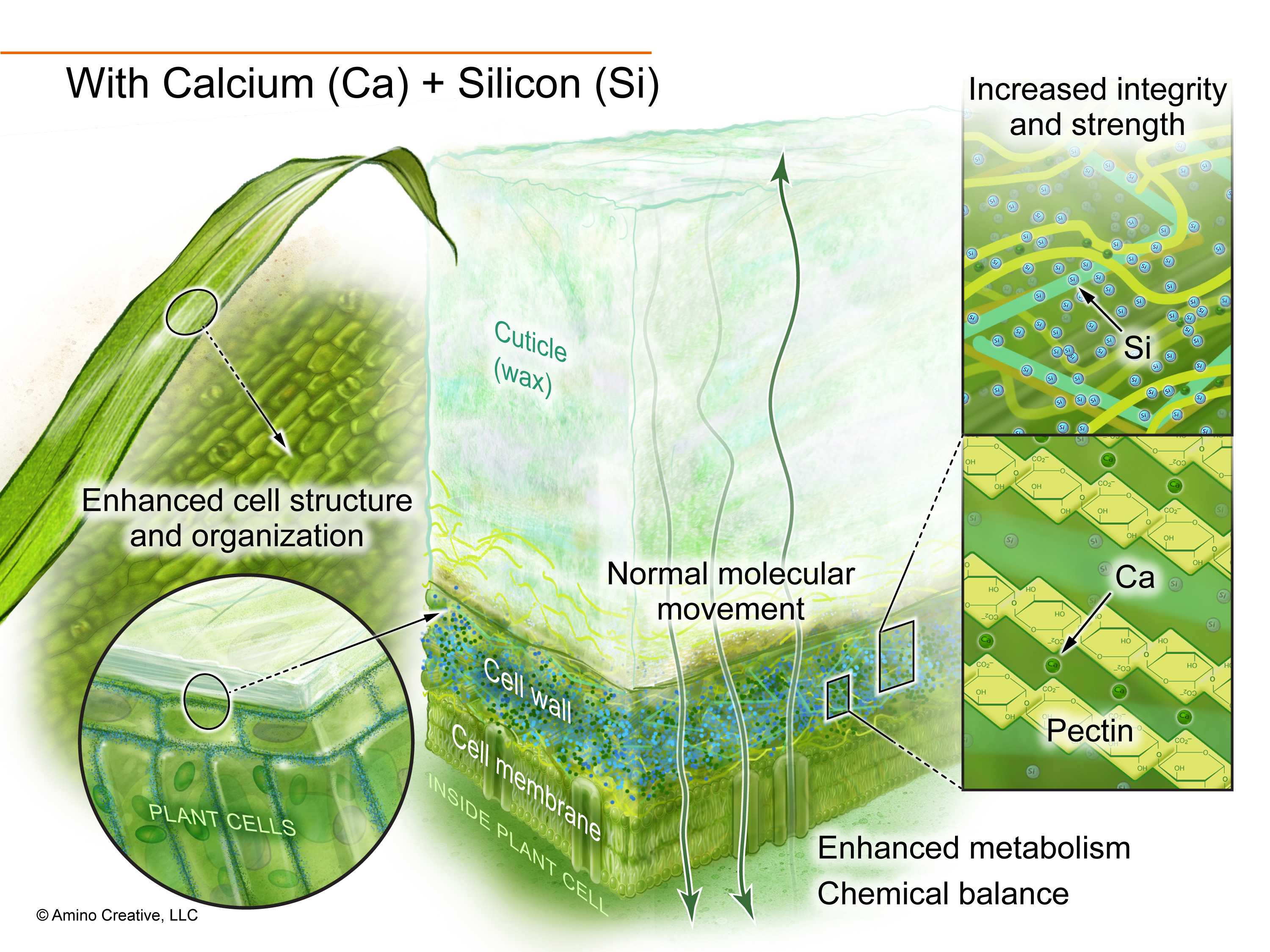 Illustration showing effects of added calcium and silicon.