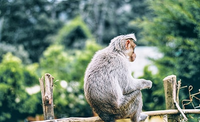 Wli Waterfall & Monkey Adventure (Ghana)