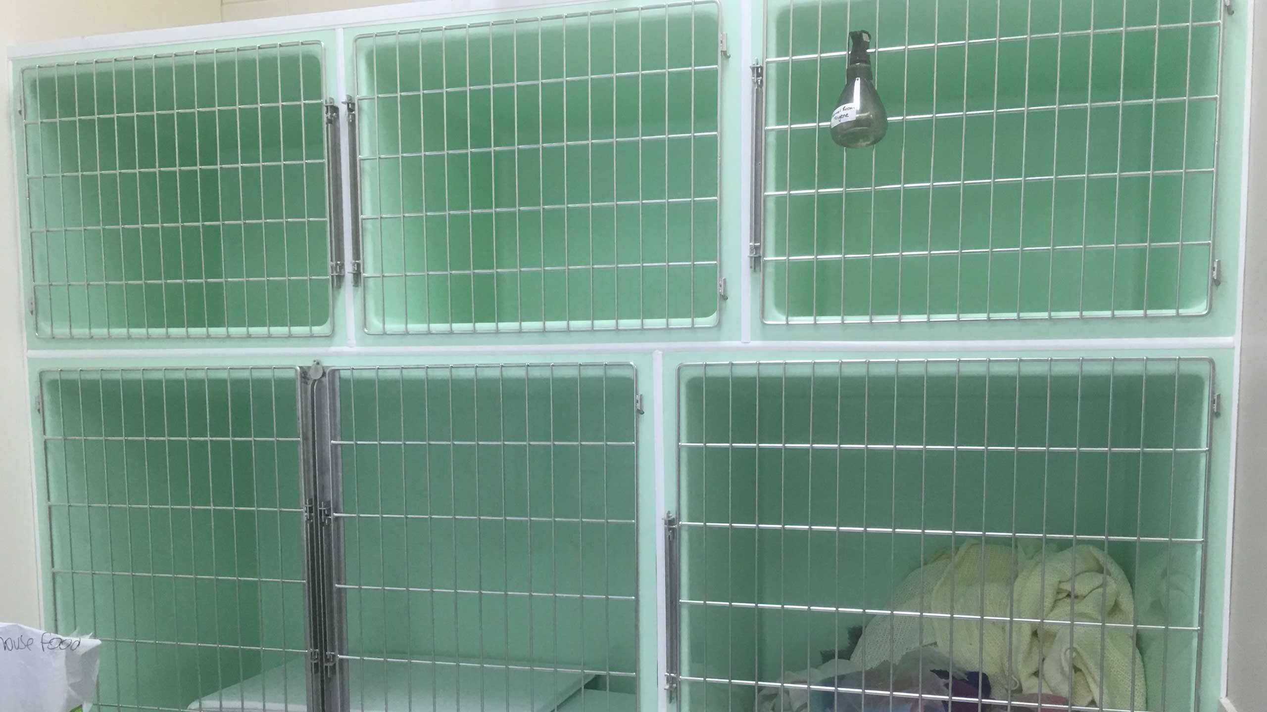 Creature Comfort Cages cage bank: 3 x Medium Dog Cages (top), 1 x Double Wide Dog Cage + 1 x Large Dog Cage (bottom)