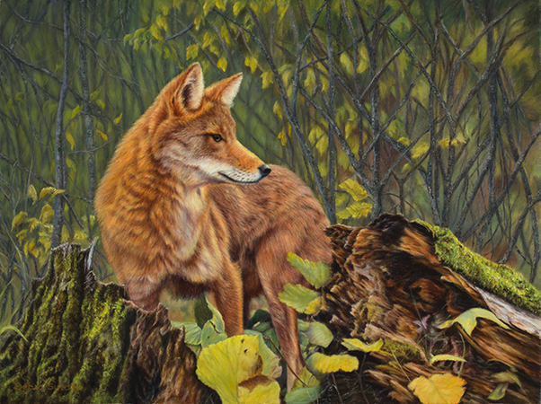 """""""Ever Vigilant"""" - """"18 x 24"""" Oil on Linen Coyote- Original Available, Prints Available"""
