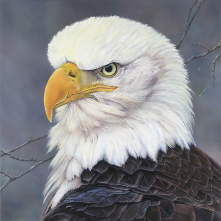"""""""Fearless"""" - 28""""x 28"""" Oil on Linen Eagle"""
