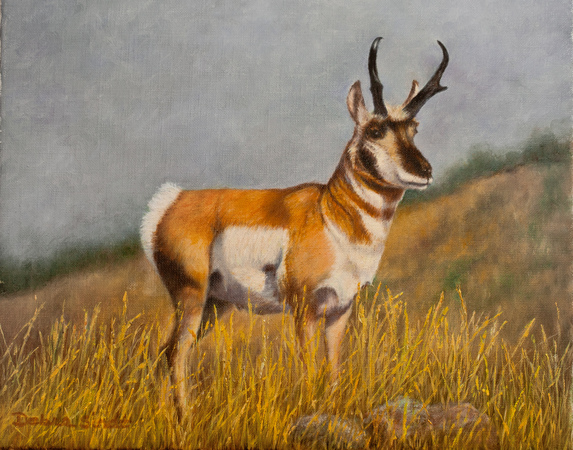 """""""At Attention"""" - 9""""x12"""" Oil on Linen -Antelope"""