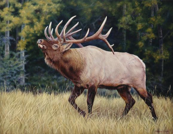 """Ready For The Challenge"" - Chosen 2018 Rocky Mountain Elk Foundation Premier Art Program ""Featured Artist"" Prints Available"