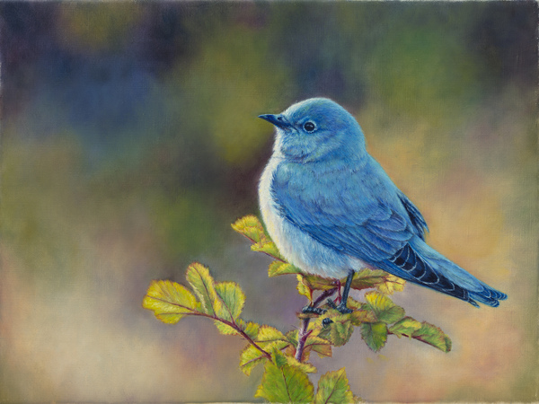 """Mr Bluebird"" - 12""x 14"" Oil on Linen- Prints Available"