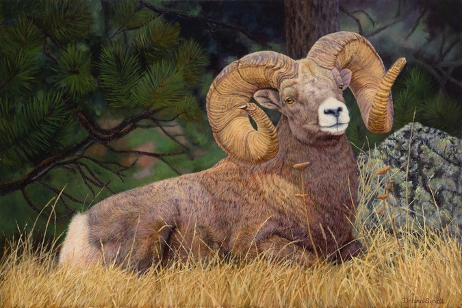 """""""No Rival"""" - 24""""x 36""""Oil on Linen Big Horn Sheep- Prints Available"""