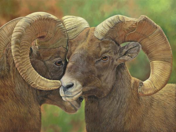 """Comrades""  - 30""x 40"" Oil on Linen- Big Horn Sheep"