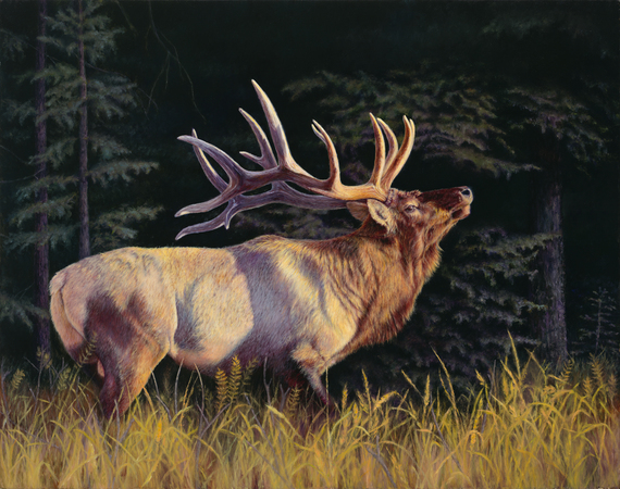"""""""The Patriarch"""" - 28""""x 40"""" Oil on Linen Elk- Prints Available"""
