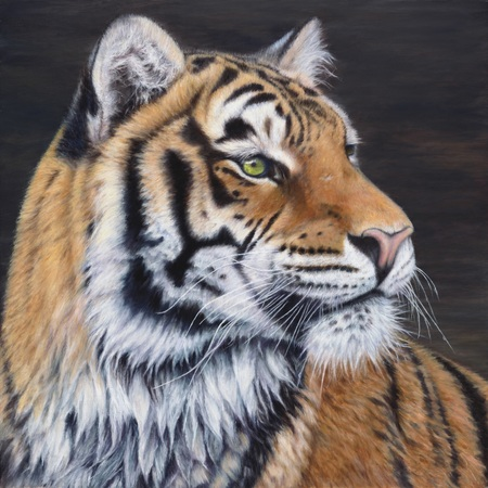 """""""The Tigress"""" - 18""""x 18"""" Oil on Linen- Original Available, Prints Available"""
